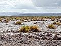 Atacama-43 (26389335932).jpg
