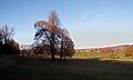 Autumn, Reigate, Surrey (8212511221).jpg
