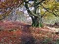 Autumn on Hill of Ardbeck, Peterculter - geograph.org.uk - 618030.jpg