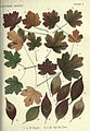 Autumnal leaves (Plate 6) (6796243433).jpg