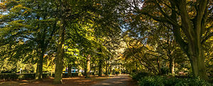 War Memorial Park, Coventry - Autumnal photograph of the iconic avenue of Atlantic cedars in Coventry's War Memorial Park looking North.