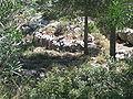 Avshalom's Cave IMG 0983.JPG