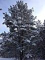 Avtozavodskiy rayon, Tolyatti, Samarskaya oblast', Russia - panoramio (199).jpg