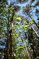 Bäcks naturreservat träd.jpg
