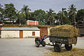 BRRI Bangladesh Rice Research Institute Rajshahi.jpg