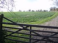 Back entrance to Bighton House - geograph.org.uk - 374984.jpg
