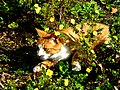 Bad Sobernheim – hungriger Bonsai-Tiger ..... - panoramio.jpg