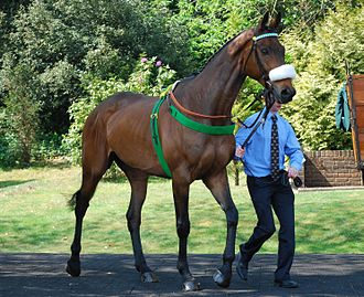 Grand National - Ballabriggs, the winner of the 2011 Grand National.