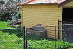 Balwyn Bills Horse Trough.JPG