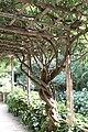 Bambouseraie de Prafrance 20100904 103.jpg