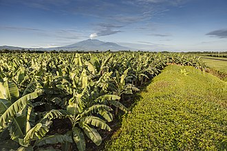 Chiquita Brands International - Chiquita Banana plantain in Costa Rica, Turrialba volcano in the background.