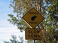 Bandicoot Crossing - Flickr - GregTheBusker.jpg