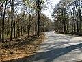 Bandipur Tiger Reserve - panoramio (19).jpg