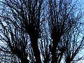 Bare Trees 4.jpg