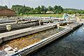 Bassins de la pisciculture de la Calonne.jpg