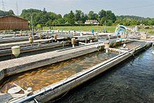 Freshwater fish farm