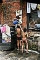Bath time in Kathmandu (3493043601).jpg