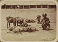 Bazaar Types. Sheep Vendor WDL10702.png
