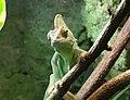 Bdg zoo terrarium 27 01-2015.jpg