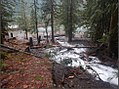 Bear Gulch Day Use Site - Olympic National Forest - November 2017 02.jpg
