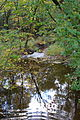 Beaver Run near Shumans, Pennsylvania 1.JPG