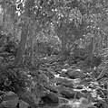Beek in het oerwoud in Malakka, Bestanddeelnr 255-6636.jpg