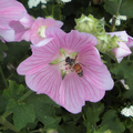 Bees and Flowers 08.png