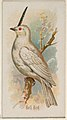 Bell Bird, from the Song Birds of the World series (N23) for Allen & Ginter Cigarettes MET DP835261.jpg