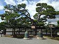 Bell and pine tree near Ninomaru-Goden Hall of Nijo Castle.JPG
