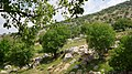 Bierain Sub-District, Jordan - panoramio (22).jpg