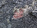 Big garnet amphibolite (Precambrian; Warrensburg, Adirondack Mountains, New York State, USA) 60.jpg