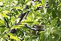 Bird (111276825).jpeg