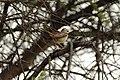 Bird Botswana 05.jpg