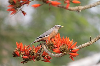 Bird eating flower.jpg