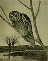 Bird lore (1904) (14751372302).jpg