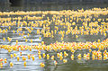Birds of a feather float together, VPU-2 volunteers for 28th Annual Great Hawaiian Rubber Duckie Race 150328-M-TH981-004.jpg