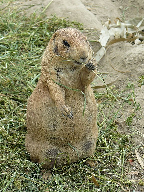 Prairie Dogs Pet Store Sylvan Lake