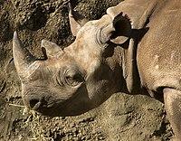 ρινόκερος που χρονολογείται εντελώς δωρεάν online dating Καναδά