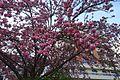 Bloom @ Jardin Pierre-Adrien Dalpayrat @ Paris (33776775145).jpg