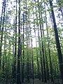 Blossom Park - Blossom Park West - Sawmill Creek- Timbermill, Ottawa, ON K1T, Canada - panoramio (1).jpg