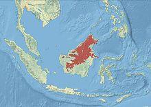 Голубая лента Pitta Distribution.jpg