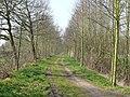 Bornem Barelstraat Jonge Lindendreef (5) - 193351 - onroerenderfgoed.jpg