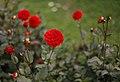 Botanic Garden (8060642278).jpg