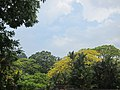 Botanic Gardens - panoramio (3).jpg