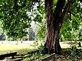 Botanic garden limbe125.jpg
