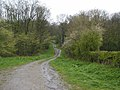 Bratt Wood Nunburnholme.jpg
