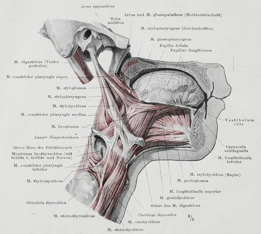 Groß Oberarmnerven Anatomie Ideen - Anatomie Ideen - finotti.info