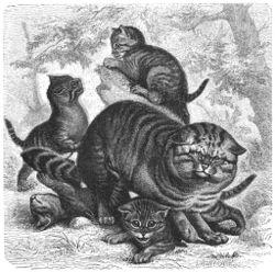 Het Leven Der Dieren Zoogdieren Vierde Orde Wikisource