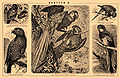Brockhaus and Efron Encyclopedic Dictionary b48 570-2.jpg