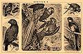 Brockhaus and Efron Encyclopedic Dictionary b48 570-2.jpg